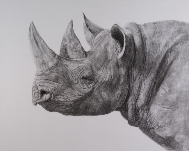 175_rhinoforweb