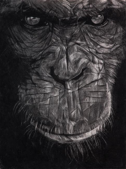 chimpanzeeinstagram.jpg